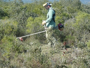 Continuaram a decorrer no final do ano passado e início de 2013 os trabalhos de limpeza mecânica de matos